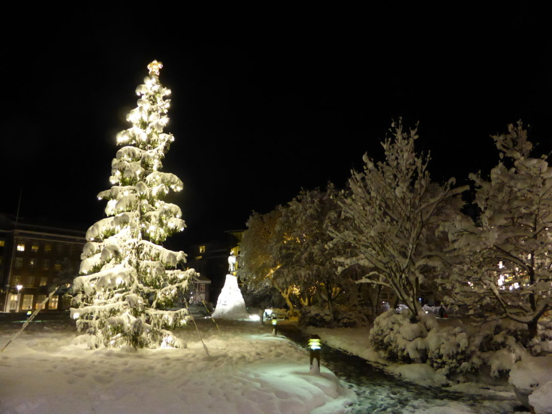 Christmas tree covered in snow from my One night out in Reykjavik, Iceland